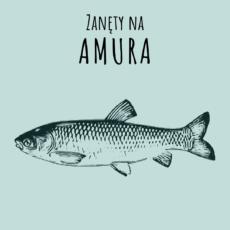 Zanęty na amura