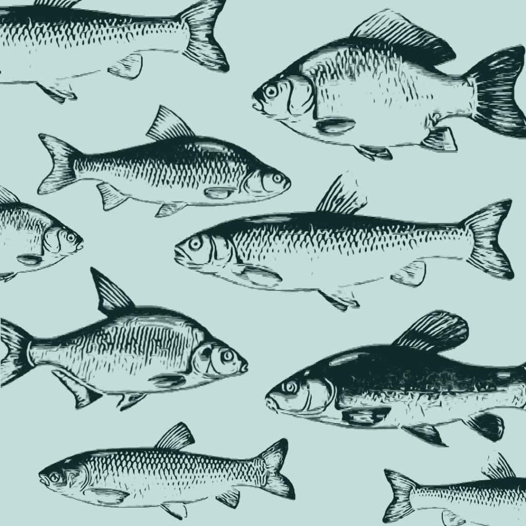 zanęty uniwersalne sklep fiskeri